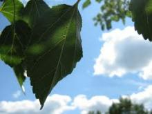 humidity control & moisture barriers (green leaf, blue sky image)